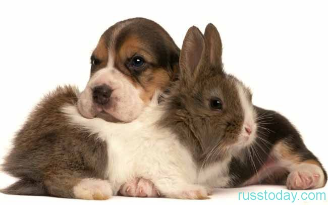 Собака и Заяц