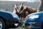 машины и лошади