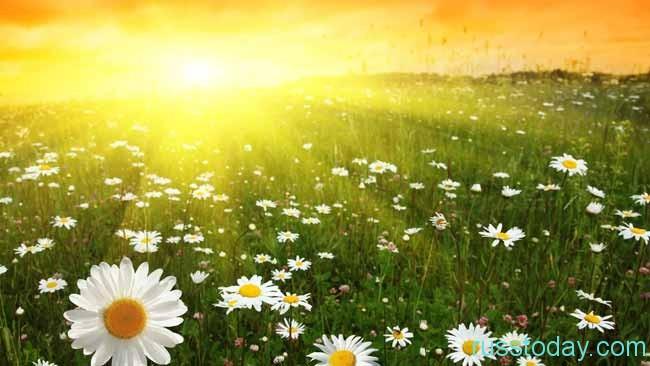 июльское солнышко