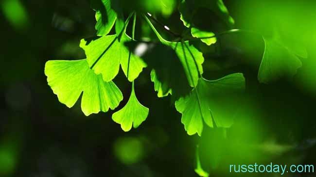красивая зелень