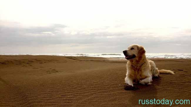 земляная собака