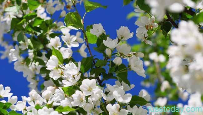 весенние цветение