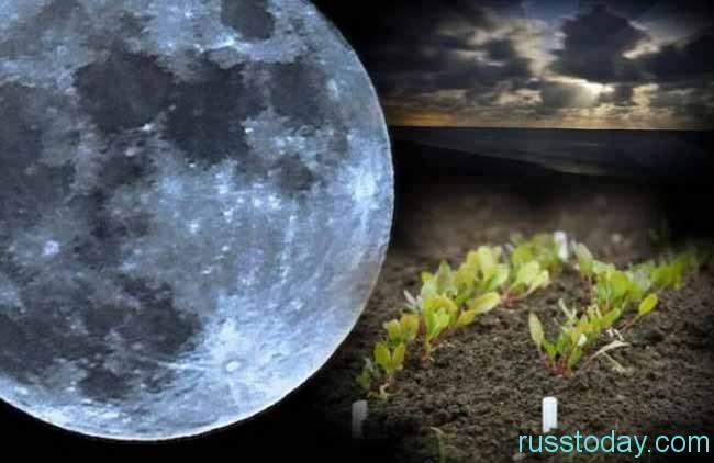 луна и ростки