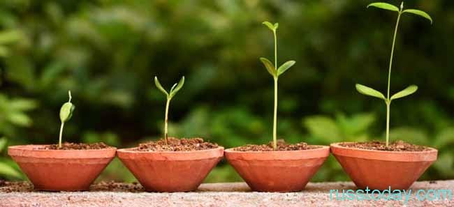 растение растет