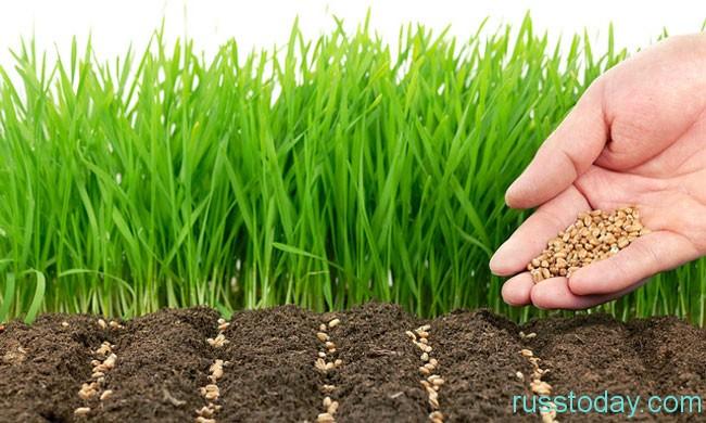 зеленые посевы