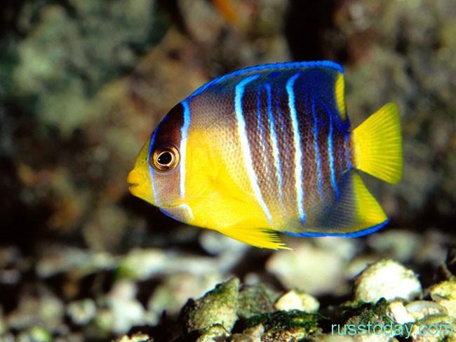 Гороскоп для Рыб на 2018 год от Павла Глобы