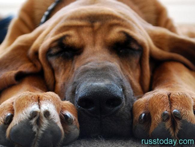 Собака является добродушным и дружелюбным зверем