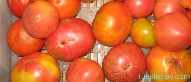 Новые сорта помидоров 2018