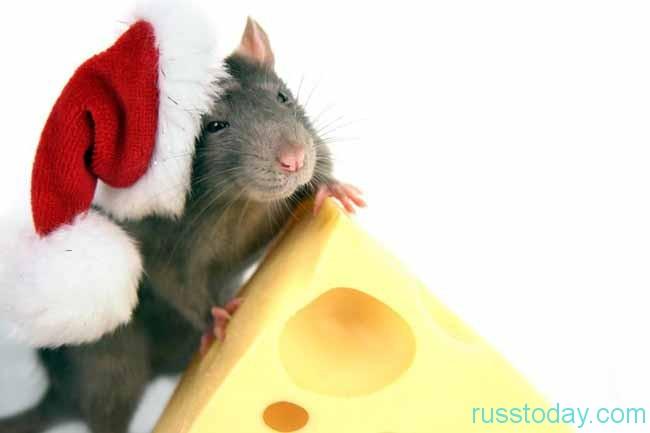 Гороскоп для Крысы на Февраль 2018 года