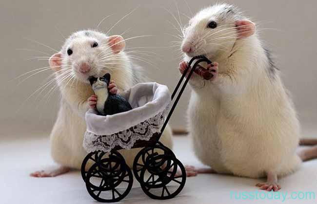 Гороскоп Крысы на Июль 2018