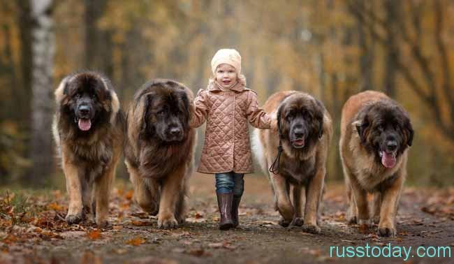девочка и собаки