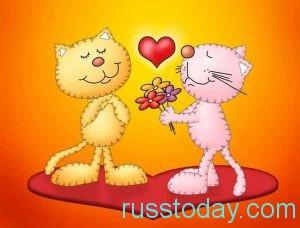 Котики и сердечко