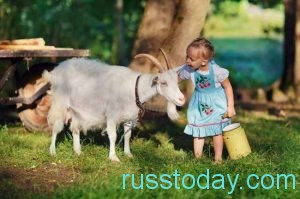 Коза и девочка
