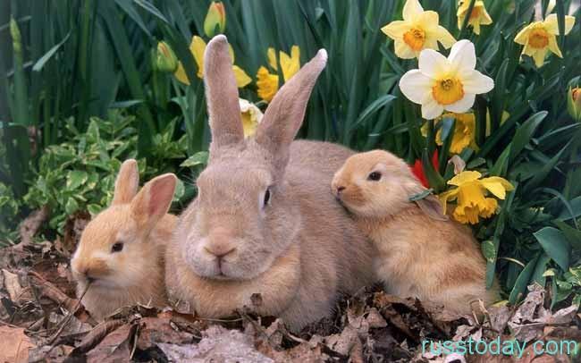 крольчиха-мама  и детки