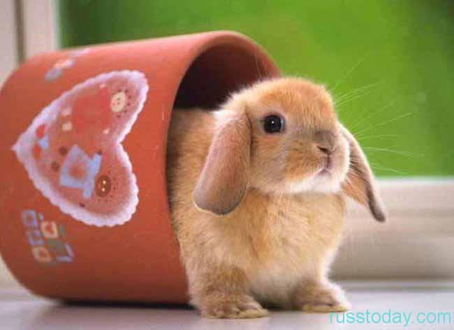 милашка-кролик