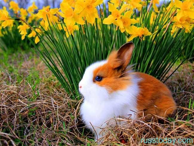 красивенный кролик