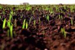 Подготовка поля к посеву