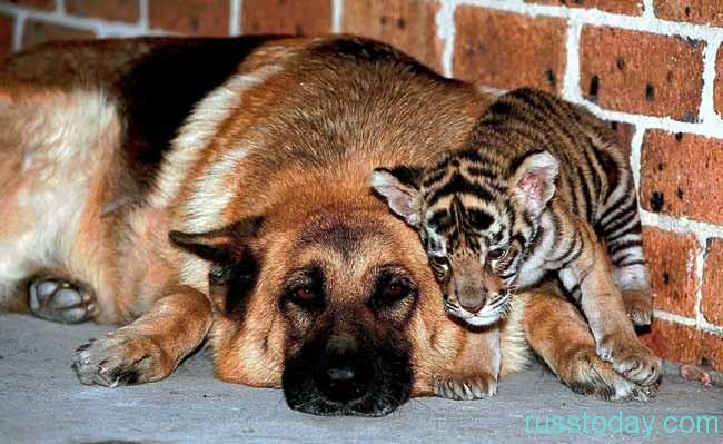 Собаки и отношения