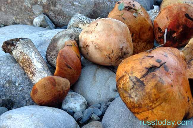 грибочки на камнях