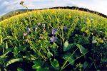 прогноз погоды летом на Урале