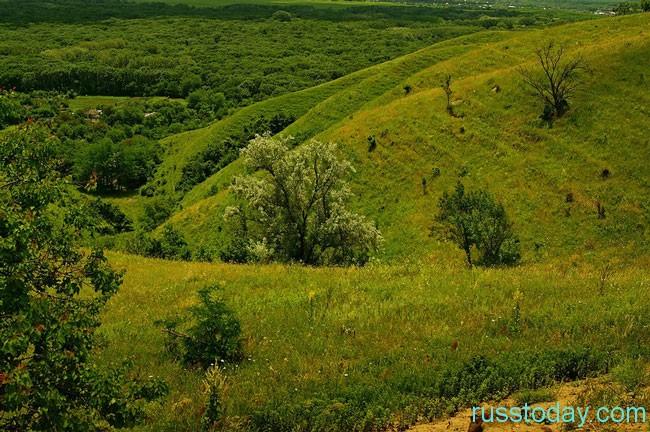 зеленые просторы