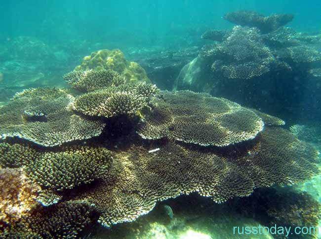 Фукуок Сиамского залива