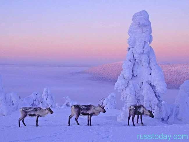 Поговорим о прекрасной Лапландии