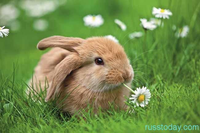 Бедный ли Кролик?