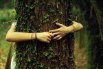 гороскоп друидов по деревьям