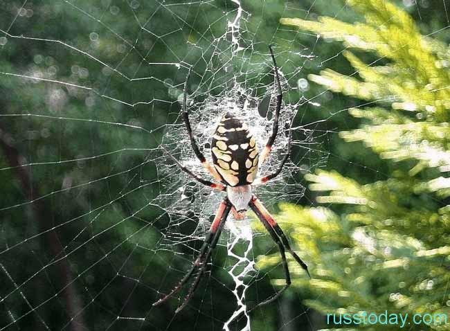 пауки снуют много паутины