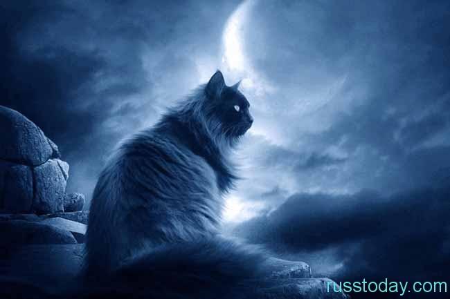 Что нельзя делать на стадии убывания луны?