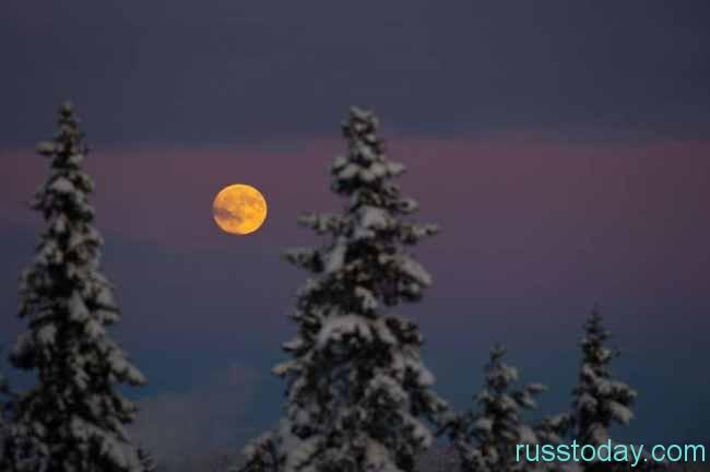 красивая луна и елки