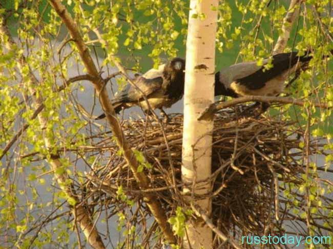 птахи слетаются на солнечную сторону