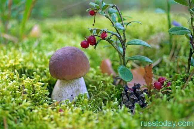 Время доставать грибное лукошко