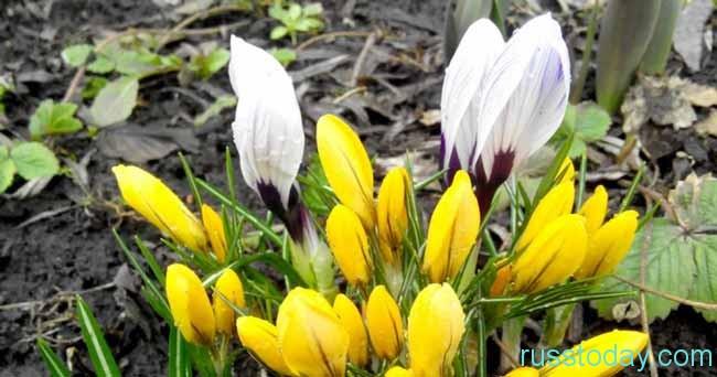 Весна 2018 года в Удмуртии
