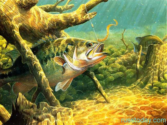 Как пройдет год у Рыб?