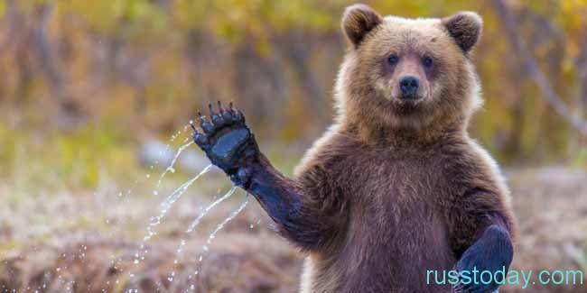 Медведь - Консерватор и Добряк