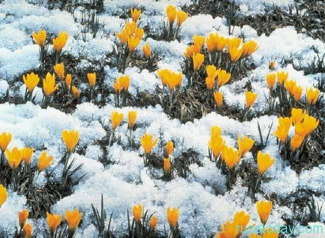 Март - это открытые весеннего периода