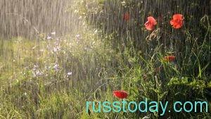 дождь в Карелии