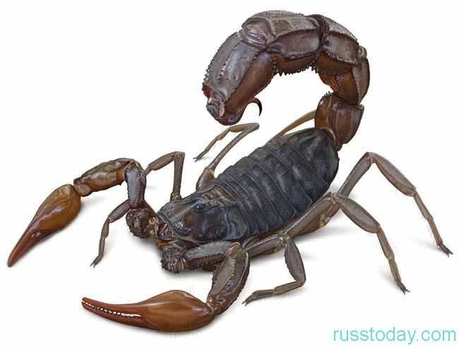 для стремительного Скорпиона