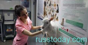 можно организовать ветеринарную клинику