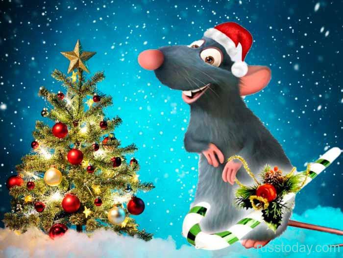 год Крысы и ее правления