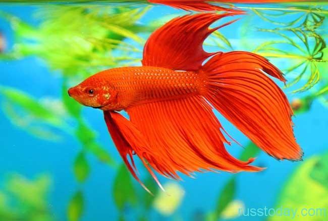 у представителей Рыб