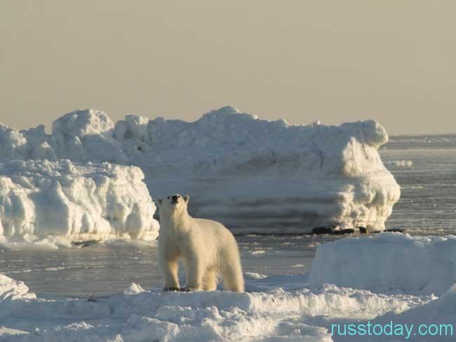 Праздник Арктики