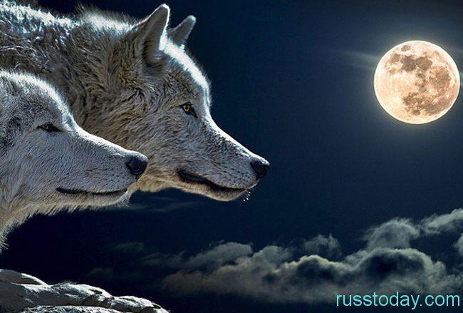 Негативные стороны полной луны.