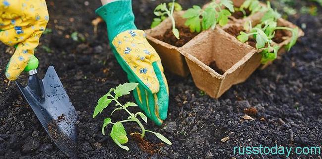 высаживайте рассаду