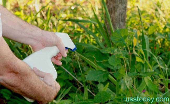 очистка территории от сорняков