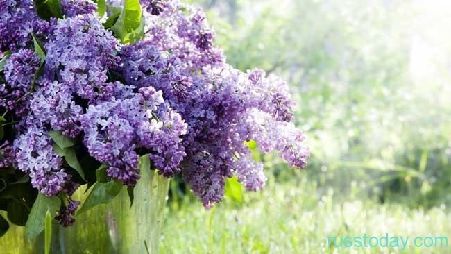Лучезарный май - это макушка весны