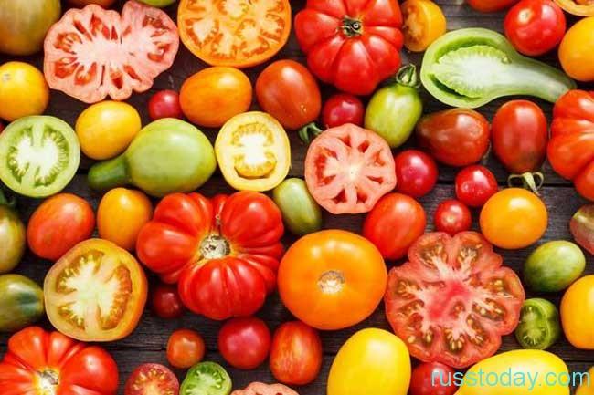 Правила выбора лучшего сорта помидор