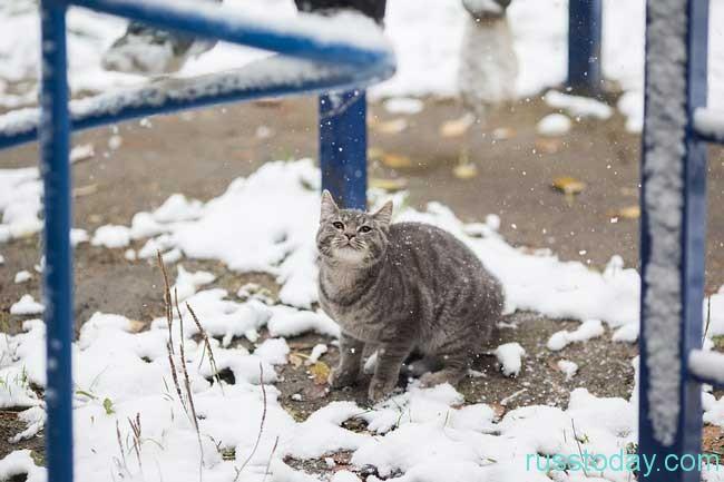 какой будет зима в Краснодаре